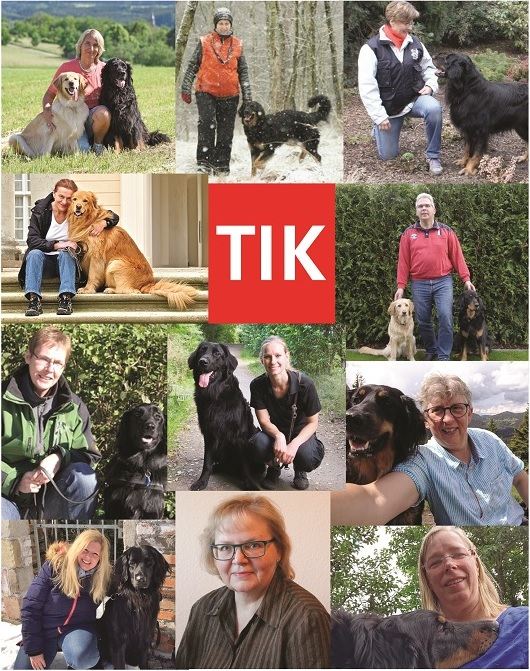 collage tik team web